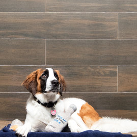 The ultimate pet concierge that offers a range of services for your furry friend.