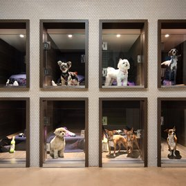 Grooming, training, socialization, dog walking, and more are avaialable at the in-building pet spa, Dog City.